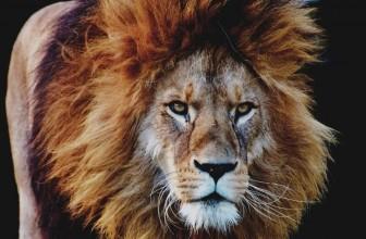Pourquoi le lion représente-t-il le pouvoir ?