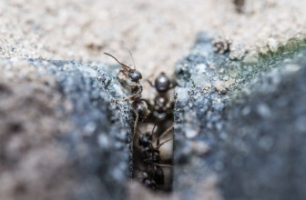 Qu'est-ce que l'entomologie ?