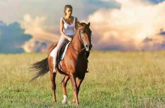 Quelle nourriture faut-il donner aux chevaux ?